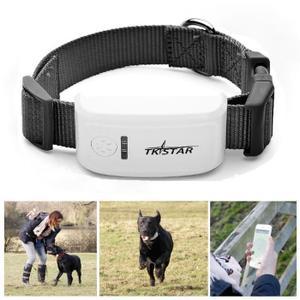 test collier pour chien
