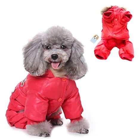 Manteau pour chien 2020 | Comparatif & Test pour trouver le