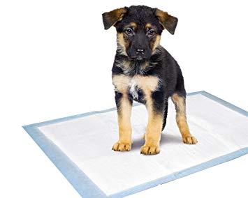 tapis hygiénique chien