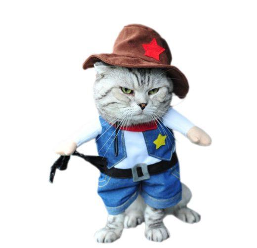 déguisement chat